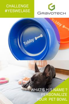 Personalize your pet's bowl with Challenge us with unusual items to engrave! Pet Bowls, Laser Engraving, Your Pet, Challenges, Make It Yourself, Pets, Animals And Pets