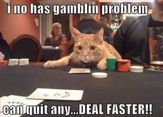 Pathway Pet Joke of the Day!    Q: Why don't cats play poker in the jungle?  A: Too many cheetahs.