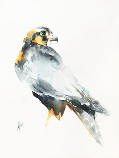 Buy Barbary falcon (Falco pelegrinoides), Watercolour by Andrzej Rabiega on Artfinder. Discover thousands of other original paintings, prints, sculptures and photography from independent artists. Watercolor Bird, Watercolor Animals, Watercolour Painting, Watercolors, Creative Connections, Original Paintings, Sculptures, Birds, Prints