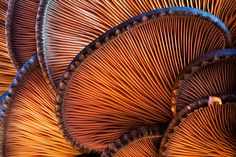By Martin Amm. Bottom side of ostyer fungi Close Up Photography, Abstract Photography, Macro Photography, Colour Photography, Microscopic Photography, Inspiring Photography, Mushroom Art, Mushroom Fungi, Patterns In Nature