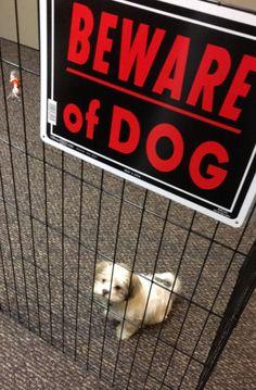 Dieser furchterregende, blutrünstige Jagdhund: