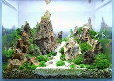 Rastaman's 1 gallon (3 L) Nano tank with Black Bee Shrimp on Tropical Fish Forum