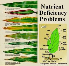 So helpful- gardening tips. Nutrient deficiency in plants - what do the leaves tell you?Organic gardening tip. Interested in designing your own organic and natural vegetable backyard? Here are some green gardening tips which will help you in the righ Organic Gardening Tips, Urban Gardening, Organic Soil, Indoor Gardening, Jardin Decor, Organic Nutrients, Pot Jardin, Paludarium, Vivarium