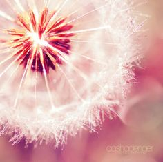 Tell me life is beautiful.   #dandelion