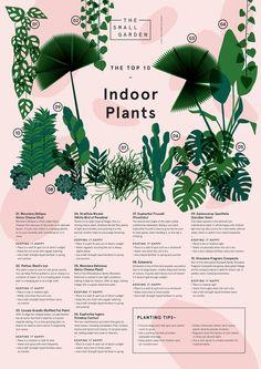 TSG-top-ten-indoor-plants.jpg