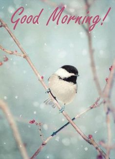 "swansong-willows: "" Fine Art Bird Photography Print ""Chickadee in Snow No. (via Fine Art Bird Photography Print ""Chickadee in Snow No. Pretty Birds, Beautiful Birds, Animals Beautiful, Animal Photography, Nature Photography, Photography Awards, Winter Photography, Prestige Photography, Photography Hashtags"