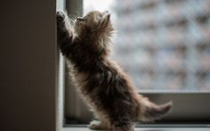 Pictures with cute cats 12