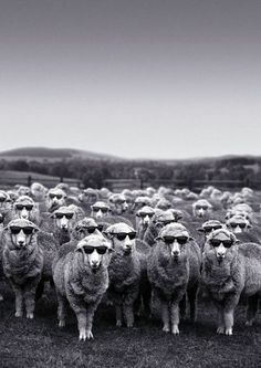 my sheep are so gonna be this cool! sheep in black or sheep in white??