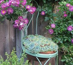 "Unique Garden Decor – Garden Decorations And Ornaments For A Finishing Touch Succulent ""upholstery"" (Echeveria imbricata) – it reminds me, I have to replant my coffee chair frames. Unique Garden Decor, Unique Gardens, Cacti And Succulents, Planting Succulents, Bambou Fargesia Robusta, Dracaena Massangeana, Echeveria Imbricata, Albizia Julibrissin, Chair Planter"