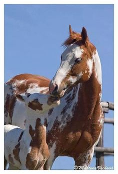 Beautiful mare and foal #horses