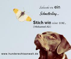 #Anwalt für #Hunde #Hundebiss #Hundezucht #Hunderecht #Zuchtrecht #Tierarzthaftung #MohammedAli R.I.P  http://www.tierrecht-anwalt.de - bundesweite Rechtsberatung #Tieranwalt #Experte 06136 - 76 28 33