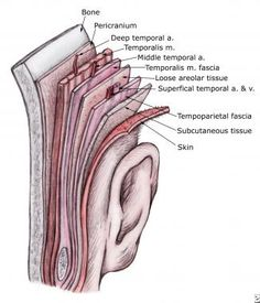 104 best Fascia images on Pinterest in 2018 | Acupressure, Adhesive ...
