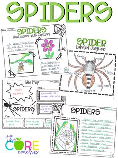 Spiders Interactive