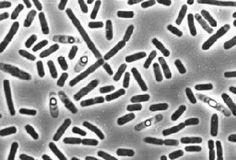 Akademia Prywatnej Opieki Zdrowotnej oznajmia – 97% populacji jest zarażone pasożytami!