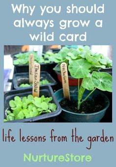 Why you should always grow a wild card :: gardening with kids from Nurture Store