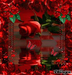 GIF R. White Roses   Animated Red Rose Red rose