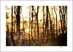 kreatives Bild in der untergehenden Abendsonne