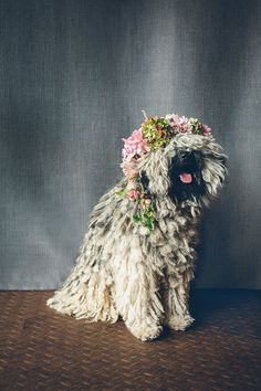 a cute pup with a floral crown. Cute Puppies, Cute Dogs, Dogs And Puppies, Doggies, Baby Animals, Cute Animals, Spring Animals, Wedding Fotos, Dog Wedding