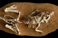 How long did dinosaur eggs need to incubate? Too long, apparently.