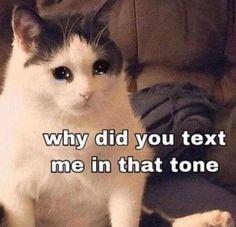 Stupid Funny Memes, Funny Relatable Memes, Funny Memes About Love, Funny Gifs, Funny Tweets, Funny Reaction Pictures, Funny Pictures, Animal Pictures, Animal Jokes