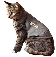 Thundershirt For Cat Anxiety | Thundershirt.com