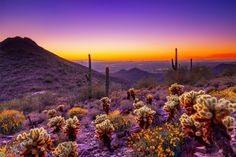 Embedded image permalink - American Nature · Jan 31 Arizona Desert sunset, Photo By Scottsdale Convention & Visitors Burea Places To See, Places To Travel, Desert Sunset, Purple Sunset, Desert Oasis, Spring Break Destinations, Travel Destinations, Destination Wedding Locations, Arizona Travel