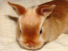 mini satin rabbits | Mini Satin Red Bunny-just to stinkin cute!
