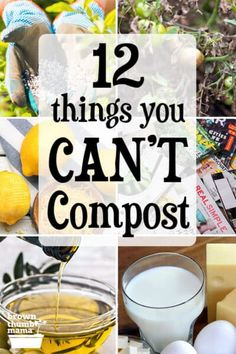 Making compost is easy, and a great way to convert kitchen and garden waste into nourishing soil. However, there are some things you can't compost--learn what they are and why you shouldn't compost them. #gardening #organicgardening #permaculture #forbeginners #ecofriendly #nontoxic Making Compost, How To Make Compost, Organic Compost, Organic Gardening, Vegetable Gardening, Gardening For Beginners, Gardening Tips, Composting Process, Black Walnut Tree