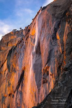 Glowing El Capitan and Horsetail Fall during sunset for only a week or so in February is one of the most popular and spectacular views in Yosemite National Park. This stunning fine art Yosemite print or canvas would look amazing in your living room, hall or office. Great for gifts, too!  Title: Horsetail Fall, Yosemite  We offer museum grade limited edition prints and canvas gallery wraps photographed by Susan Taylor made to order printed on very high quality canvas and professional photo…