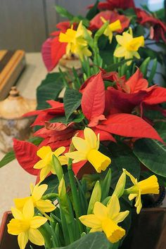 Want to add some indoor color to your decor during the wintertime? We\'ll teach you how to force springtime daffodil bulbs to bloom early, for a burst of sunshine. Read more now on Gardener\'s Path.