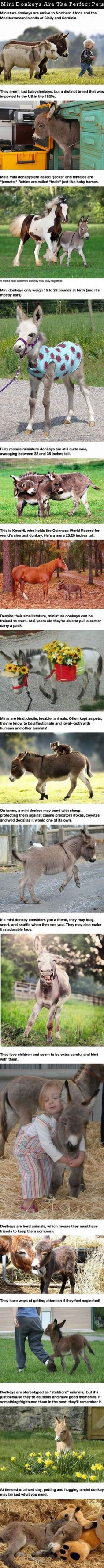 Mini Donkeys Are The Perfect Pets cute animals kids adorable kid story animal pets baby animals children stories funny animals heart warming