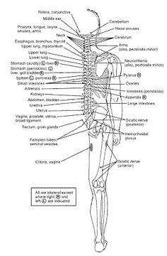Health & Beauty Natural & Alternative Remedies Aus Byol Meridian Chart Acupressure Su Jok Quick Academics