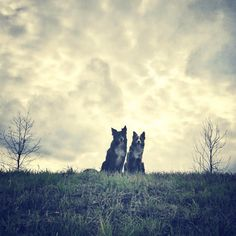 The cutest pair at Far West Dog Park - Austin, TX - Angus Off-Leash Le Far West, Dog Park, Austin Tx, Cute Dogs, Parks, Texas, Puppies, Cubs, Dog Runs