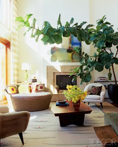Decorating With A Fiddle Leaf Fig Also The Cheapest Place To Buy A Fiddle Leaf Fig Www Whatsurhomestory Com