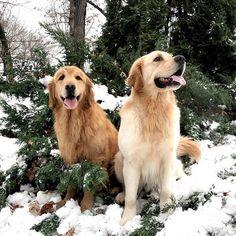 Finn and Teddy in a winter wonderland