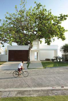 Tree // Architecture// Garage door.