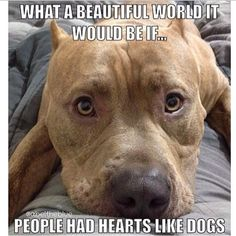 -If people had hearts like pitbulls. I Love Dogs, Puppy Love, Cute Dogs, Dog Quotes, Animal Quotes, Funny Animals, Cute Animals, Pit Bull Love, Dog Life