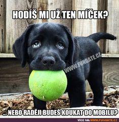 Hodíš mi už ten míček?