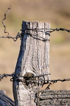 old fence post with barbed wire is a strong memory from my childhood....so many barbed wire fences!