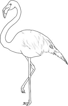Flamingo color page. Print this free Flamingo coloring sheet and craft your own animal coloring book. Flamingo Painting, Flamingo Art, Pink Flamingos, How To Draw Flamingo, Flamingo Wallpaper, Flamingo Pattern, Bird Drawings, Animal Drawings, Flamingo Drawings