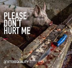 He doesn't care how much you love bacon. Seriously pissed at how much people are not recognizing how dann cruel they are when they kill something permanently for the temporary taste. Wtf