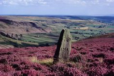Image result for yorkshire moors paintings