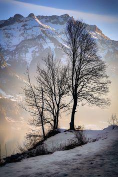 Winter trees, Interlaken   Switzerland (by Davide Seddio)