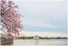 Heather Photography » Northern Virginia and DC Metro Area Photographer