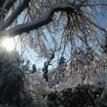 inverno bianco Plants, Outdoor, Winter Time, Diary Book, Pictures, Outdoors, Plant, Outdoor Games, The Great Outdoors