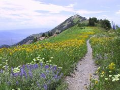 "Ben Lomond Trail- ""This site lists all of the Utah lakes, campgrounds, hiking trails and off - roading areas. Also has directions on how to get to each"" said another pinner"