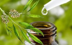 Benefits of Using Tea Tree Oil for Yeast Infection, Nail Fungus and Warts