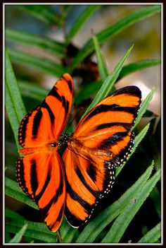 Beuatuful butterfly - Butterflies Photo (16959342) - Fanpop