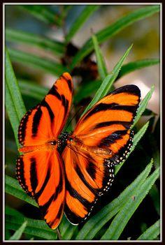 Beuatuful butterfly - Butterflies Photo (16959342) - Fanpop