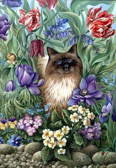 Spring Cat Photograph by Irina Garmashova-Cawton